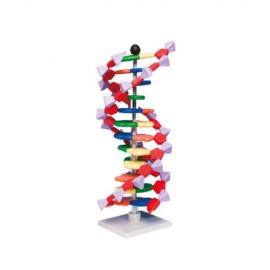 Modelo mini ADN - Envío Gratuito
