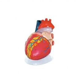 Modelo Corazón Gigante. Modelo CVQ7011 - Envío Gratuito